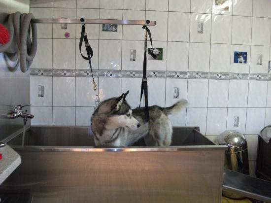bain husky