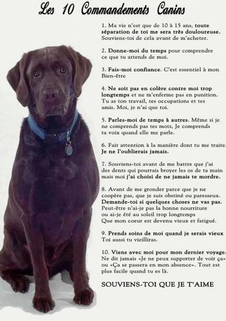 les-10-commandements-canins.jpg